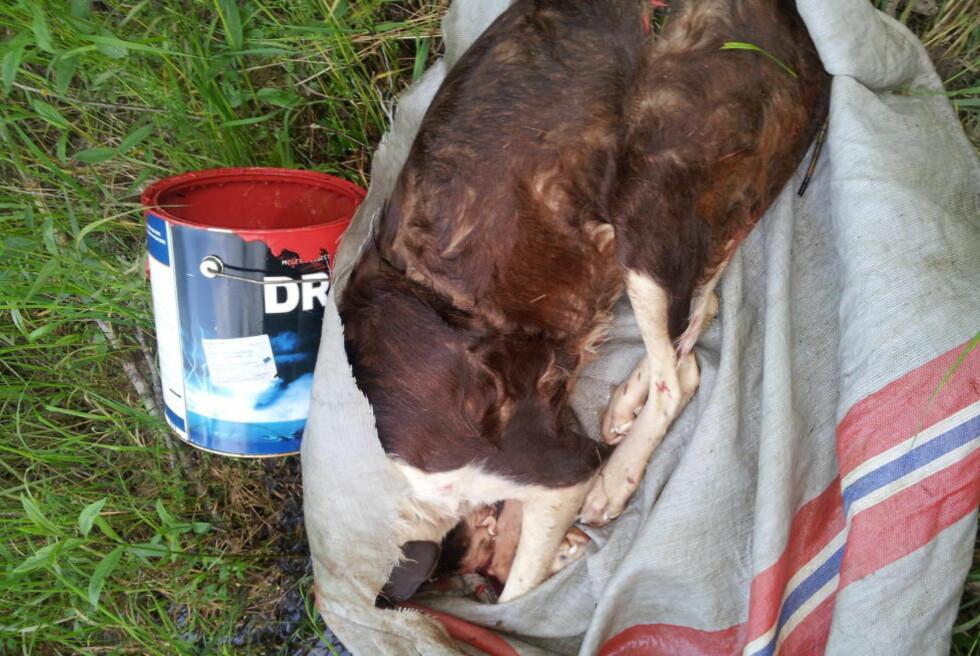 FANT DØD HUND: Ole Jan Svensrud og kompisen var ute på fisketur da de oppdaget en postsekk med en død hund i elva. Foto: Ole Jan Svensrud
