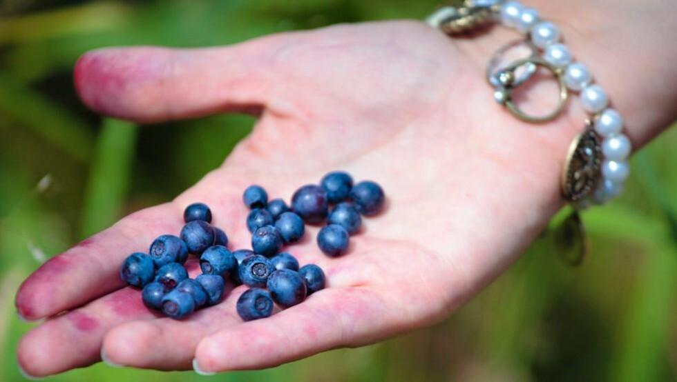 SUNT: Bær er noe av det aller sunneste du kan spise. Illustrasjonsfoto: Colourbox