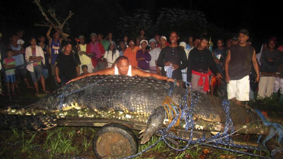 GOD OG RUND:  Det tok hele to år å fange den svære krokodilla «Lolond», som ble tatt i november i fjor. Over 100 personer deltok i arbeidet med å fange krokodilla. Foto: AP Photo / NTB Scanpix