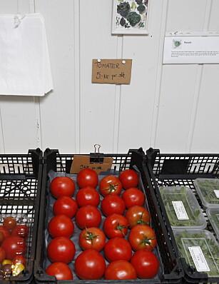 POPULÆRT: Gartneriet kunne dyrket mange flere tomater og likevel vært utsolgt. Foto: KRISTIN SVORTE