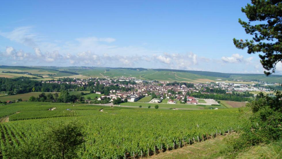Verdens beste vinby:Rundt byen Chablis kan flere byer produsere vinen, området er delt i fire kvalitetsnivåer. Her er Grand Cru-vinmarker mot byen Chablis, og Premier Cru-vinmarker på andre siden. Foto: Ken Engebretsen
