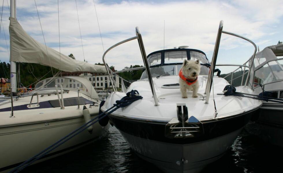 LABERT SALG:  Flere sesonger med dårlig vær og dårlig salg skaper krisestemning blant båtprodusentene. Foto: Kirsten Buzzi / Dagbladet