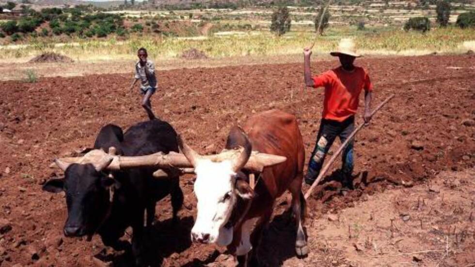 FÅR SJANSEN: Bøndne i Afrika kan tjene på at det er tørke i USA. Foto: Lars M. Hjorthol/NTB Scanpix