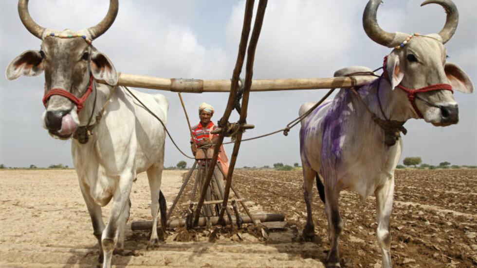 GUJARAT: I staten Gujarat har tørken rammet spesielt hardt. Det har fått politikerene i panelet for tørke til å samles til krisemøte i neste uke.   Amit Dave/Reuters/NTB Scanpix