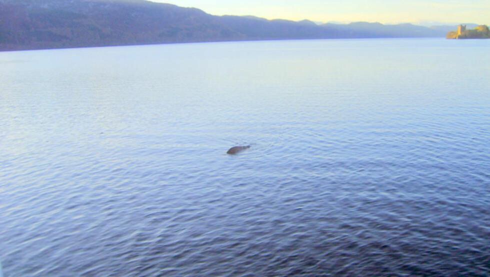 HER ERN: Er dette sjømonstret i Loch Ness? Foto: Cascade News