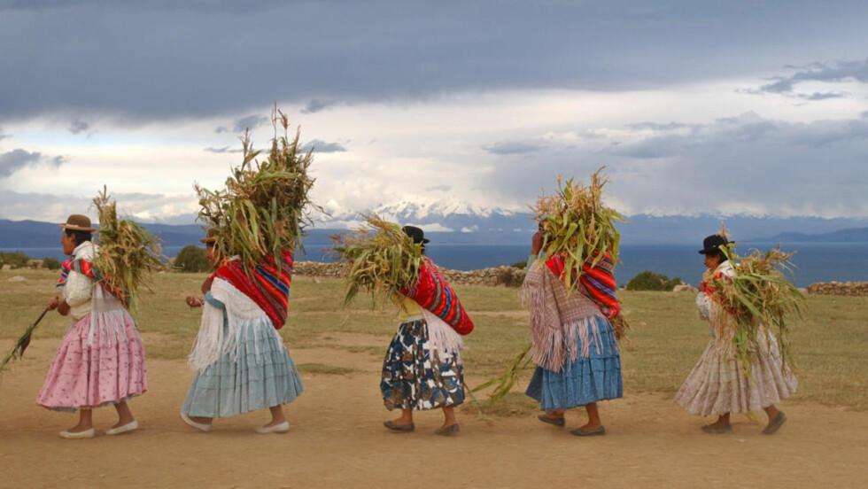HØSTTAKKEFEST: Aymara-kvinner danser med årets første avling for å takke Pacha Mama for høsten på Soløya i Titicacasjøen. Her skal urfolk i desember feire at planetene kommer på linje etter 26 000 år. Foto: AP / Scanpix / Dado Galdieri
