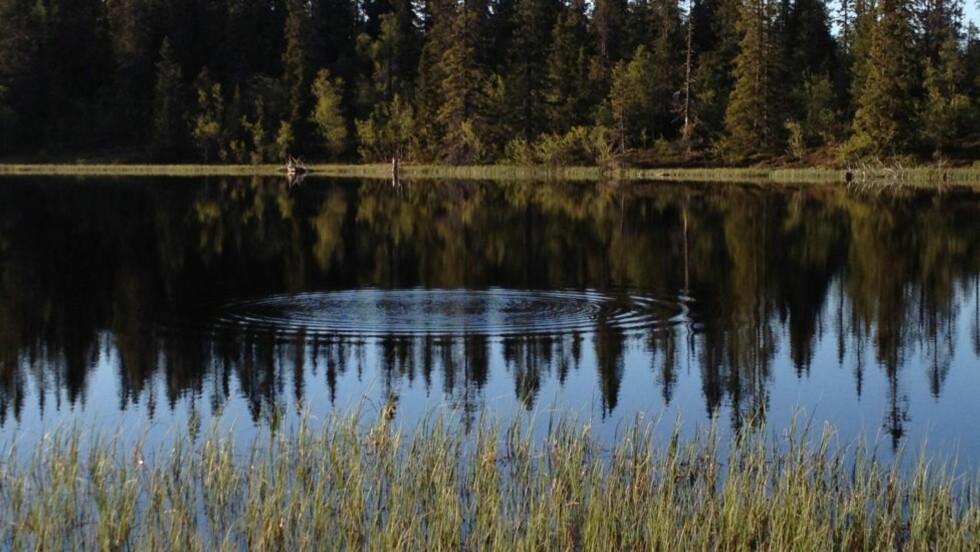 FISKEVAK: I Lille Byringstjernet i Rendalen er det fisk å se. Foto: TORKEL SKOGLUND / STATSKOG