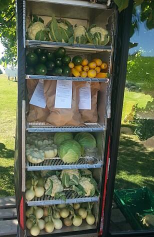 ITTE REIST: Fra dette kjøleskapet langs veien utenfor Hamar solgte Louise Gjør grønnsaker for 50 000 kroner i sesongen. Bealing skjedde i et norgesglass. Butikken gikk så bra at hun nå har laget gårdsbutikk som er åpen hele året. Foto: LOUISE GJØR