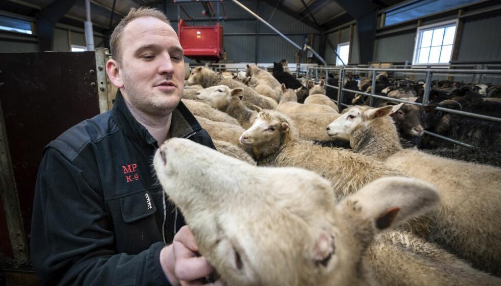 SAU: Landbruksminister Jon Georg Dale besøker sauene. Foto: Øistein Norum Monsen / Dagbladet