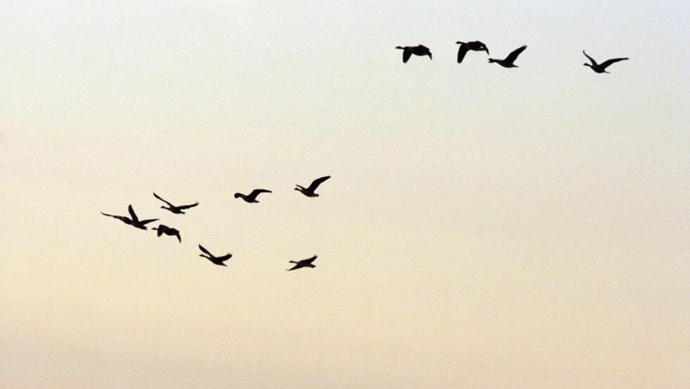 "LUFTIG FINALE: ""Jeg har trekkfugler / i brystet / du er / syden"", skriver poeten Minskyld/Synskyld i sitt finaledikt fra mars."