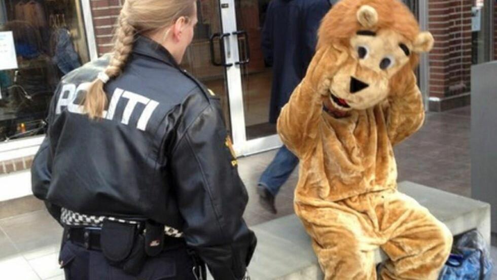 INGEN ULV I FÅREDRAKT: Det var ingen ulv i fåredrakt, men en tigger i løvedrakt, som ble jaget ut av Glasshuset i Bodø sentrum av politiet i dag. Foto: Politiet