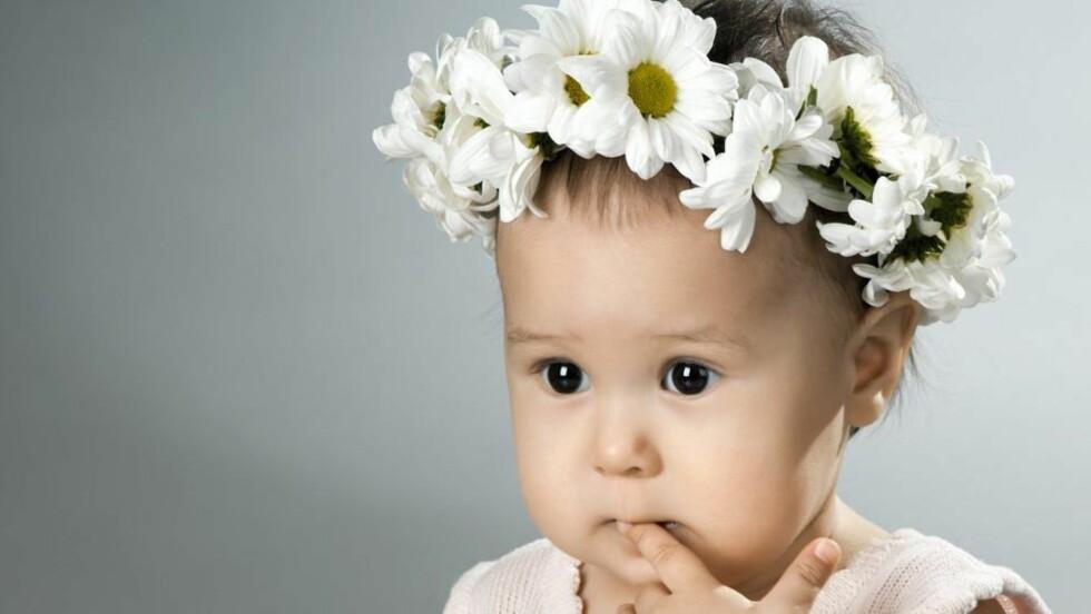 BLOMSTERNAVN: Kunne du tenke deg å kalle babyen din Daisy? Daisy er det engelske navnet på prestekrage, og blant annet datteren til kjendiskokk Jamie Oliver heter dette. © Illustrasjonsfoto: www.colourbox.com