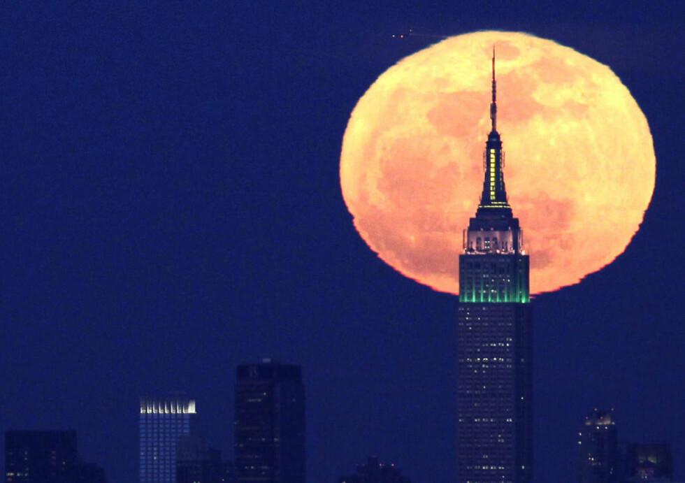 STOR OG STØRRE: Lørdagens «supermåne» vil virke ekstra imponerende når den ligger nært horisonten. En utbredt misoppfatning er at dette skyldes at den sees relativt til andre objekter som bygninger og trær. Den virkelige forklaringen skyldes blant annet hvordan hjernen oppfatter avstander. Se en fyldig forklaring her. Foto: AP Photo/Julio Cortez/Scanpix