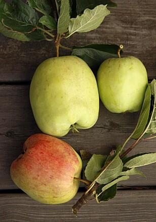 ULIKE: Eplene i hagen er ikke enten grønne eller gule eller røde, men i en rekke andre fargesjatteringer.