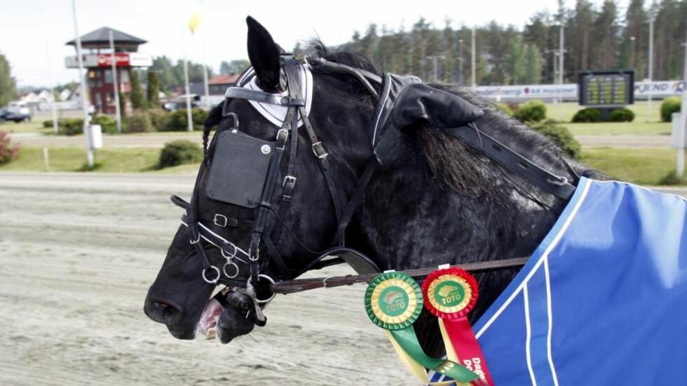 NY RIKSTOTO-ROSETT. Knell har vunnet V75-løp før. Lørdag er den kjappe hesten storfavoritt i Bergen. Foto: HESTEGUIDEN.COM.