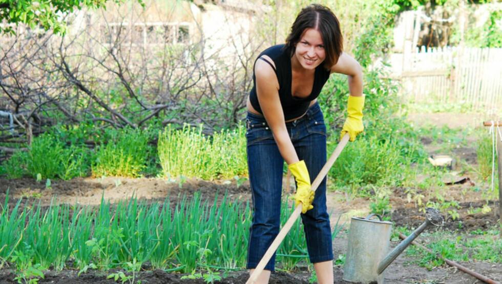TRAVLE DAGER: Ikke stress med alt du må gjøre. Lær deg heller hva du ikke skal gjøre i hagen. Foto: Colourbox