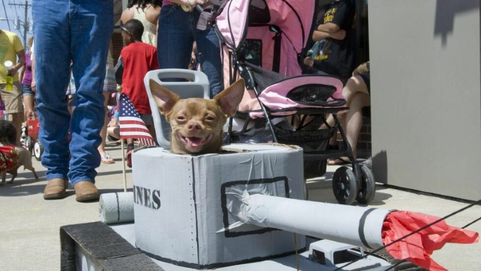 KREATIVT: Denne hunden var godt polstret i hundeparaden og virket greit fornøyd med kostymet. Foto: Getty Images/AFP