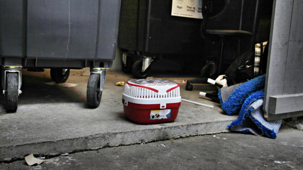 TRIST: Her ble hamsteren funnet tirsdag ettermiddag i sentrum av Oslo. Foto: Jacques Hvistendahl