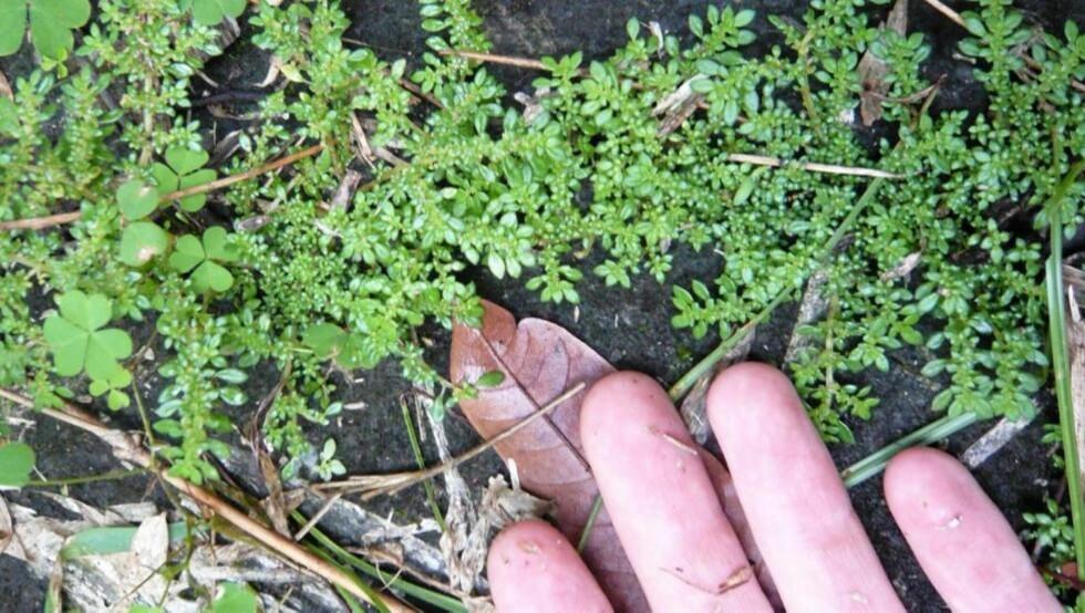 TA DEG TID: Holder jorden i hagen din mål? Det finnes ting du kan gjøre for å finne ut av nettopp det.  FOTO: Flickr