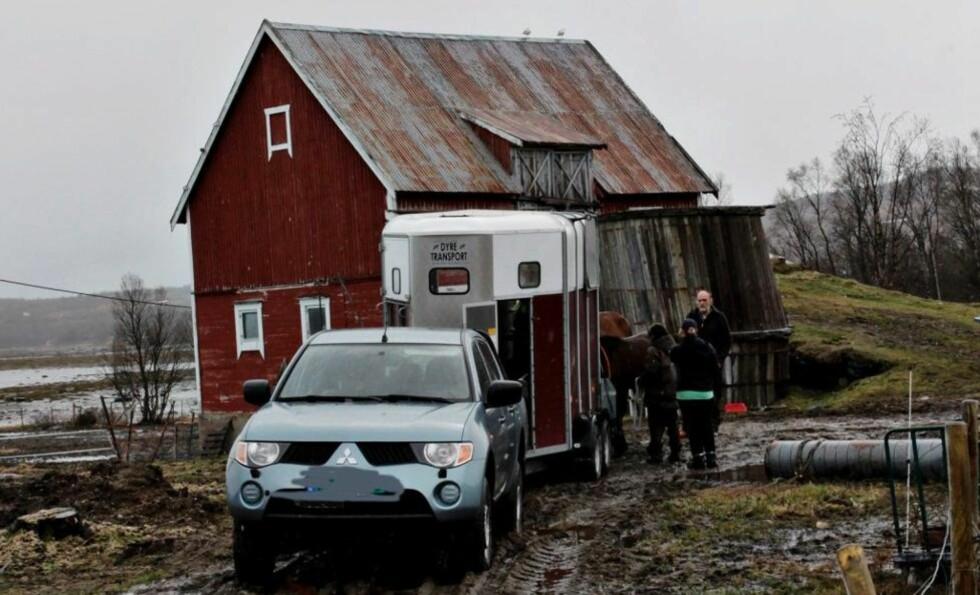 HENTET HESTENE:  Familien på Bunes gård i Tromsø har gått med på å omplassere de syv hestene som krangelen sto om. I dag ble hestene hentet. Foto: Vidar Dons Lindrupsen / Nordlys