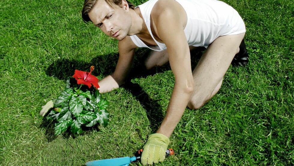 SNAKKER TIL HVERANDRE: Det er ikke bare mennesker som snakker til plantene sine. Også plantene snakker til hverandre, viser en ny israelsk studie. Foto: LARS MYHREN HOLAND/DAGBLADET