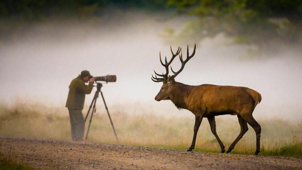 GJORT ER HJORT: Denne fotografen hadde en særdeles dårlig dag på jobben. Foto: Hans Kruse/Scanpix.