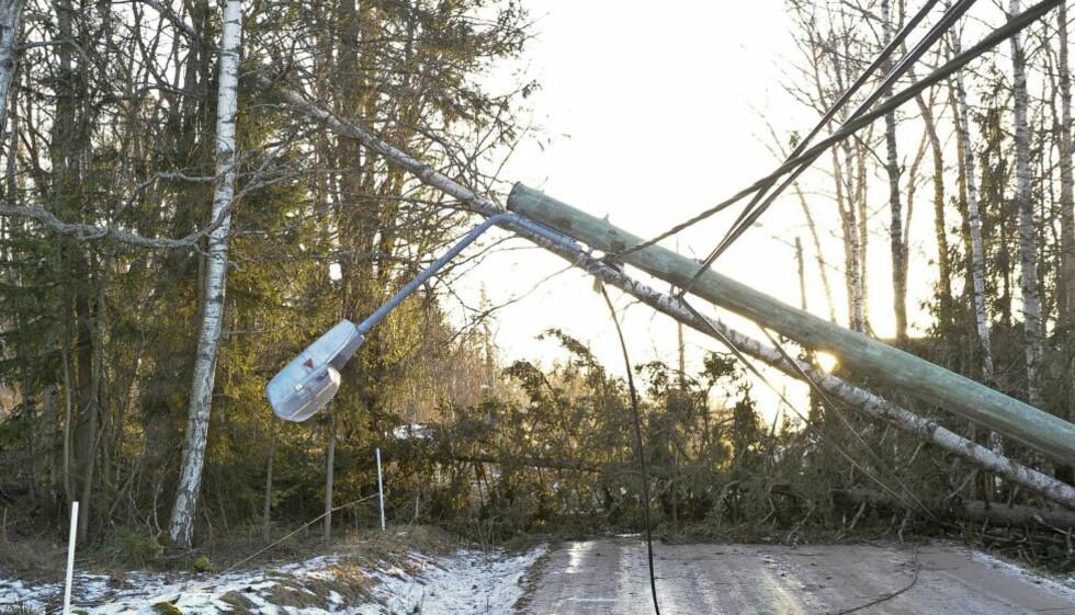 NEDBLÅST: Tusenvis av mobilabonnenter er uten dekning, etter at stormen «Dagmar» førte til store skader på kraftnettet. Det kan ta så lenge som en uke før alle er på mobilnettet igjen, opplyser Netcom. Bildet er fra stormens herjinger utenfor Sundsvall i Sverige.                                                                                                                                                                                                   Foto: ANDERS WIKLUND / Scanpix