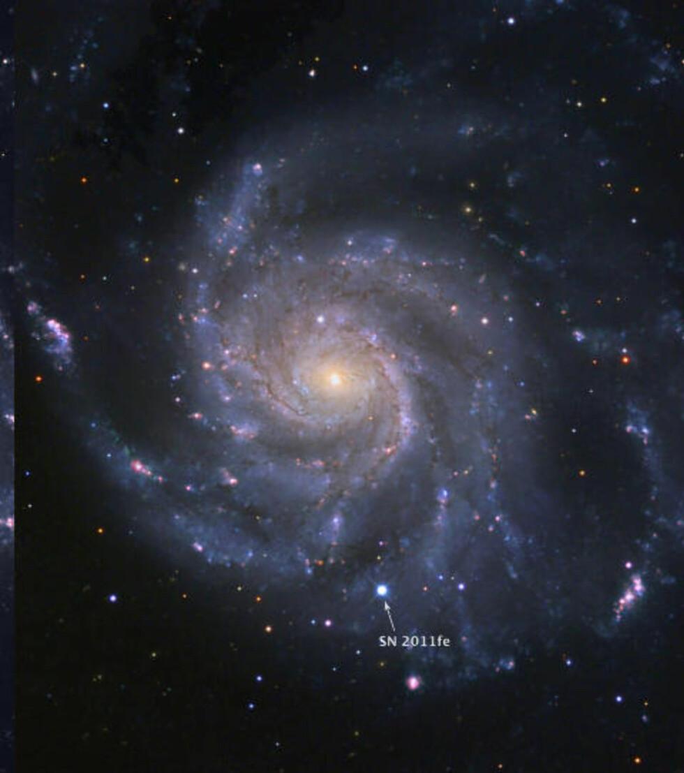 STJERNESMELL: 21 millioner lysår kan høres voldsomt mye ut, men i kosmologisk målestokk er det et steinkast. Derfor var det stort da en supernova eksploderte så nær jorda, i galaksen M101. Nyheten kommer på en tredjeplass over de beste astronominyhetene i 2011, ifølge astrofysiker Jostein Riiser Kristiansen. Foto: AFP PHOTO/BJ Fulton (LCOGT)/Palomar Transient Factory/ The Space Telescope Science Institute/SCANPIX