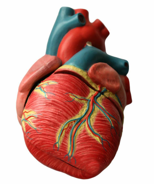 BESKYTTER: Trening senker blodtrykket, reduserer andelen av ugunstige fettstoffer i kolesterol og fjerner farlig magefett. Alt dette beskytter deg mot livsstilssykdommer. Foto: Colourbox