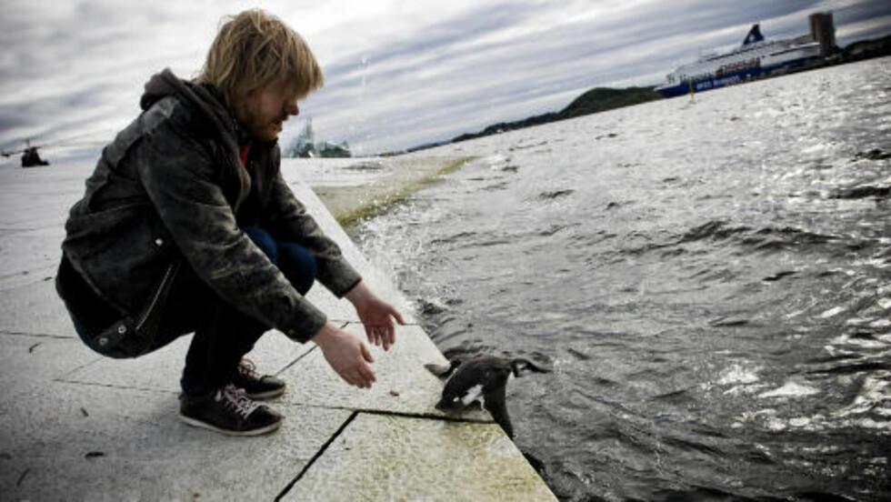 UT MOT HAVET: Lomvien ser ut til å vite hvor den vil når den ser havet igjen. Foto: Håkon Eikesdal/Dagbladet