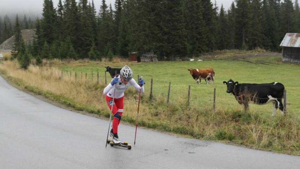 INGEN ANDRE I NÆRHETEN: Therese Johaug imponerte flere enn kyrne da hun vant et testløp i Kvitfjell i dag.Foto: Anders Skjerdingstad/ Dagbladet