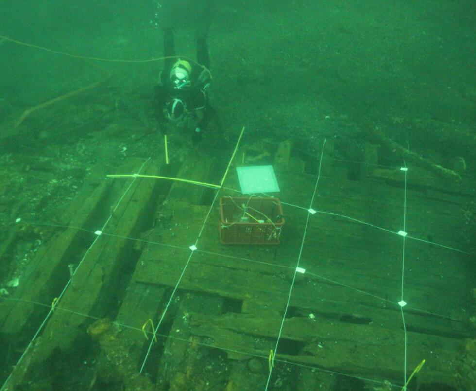 ÅSTEDET: Vraket ble først påvist i forbindelse med reguleringsarbeid i havneområdet i fjor, da dykkere fant noen kobberbolter som stakk opp fra sanden. Nå har arkeologene gravd opp godt bevarte deler av skuta som trolig sank på slutten av 1800-tallet. Florvåg var på den tida et ankringsområde for skip. Foto: Eirik Herdlevær Søyland/Bergens Sjøfartsmuseum