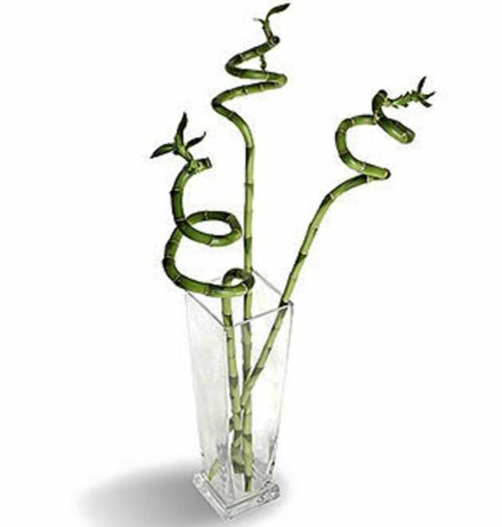 PÅ EN SNURR: Kast ut disse snurrebambusene om du vil være med på interiør-notene. FOTO: Ikea