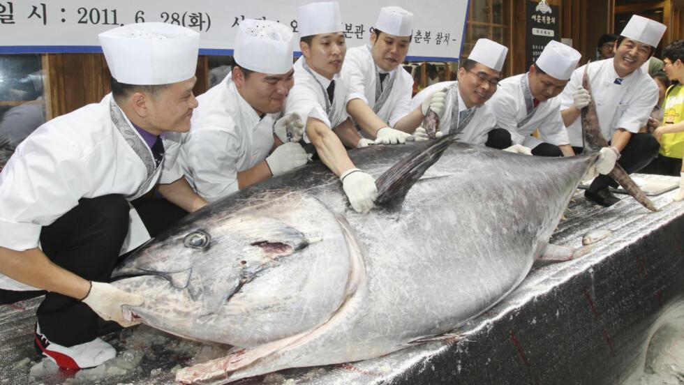 TRUET AV SUSHI:  Sushi-kokker i Seoul viser viser fram en 350 kilo tung og 2,70 meter blåtunfisk 28. juni. FOTO: KIM JU-SEONG, REUTERS/SCANPIX.