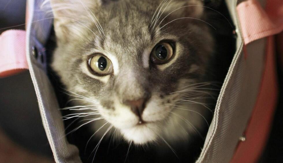 KJENNER NOEN IGJEN DENNE? Katta i sekken er muligens kjøpt inn i overgangsvinduets tolvte time.Foto:  REUTERS/Bogdan Cristel
