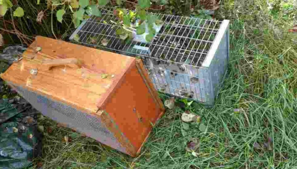FELLER: De fleste kattene gikk inn i slike bur med mat. Foto: Redd Dyra.
