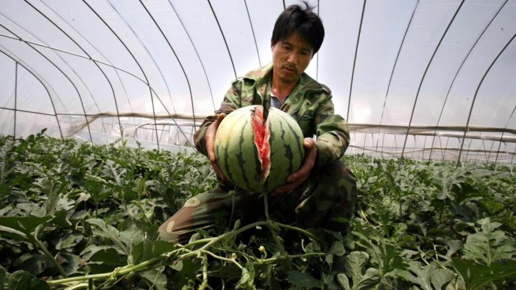 SPREKKER: Melonene vokser for mye og sprekker. Foto: EPA/ZHANG BIN/Scanpix
