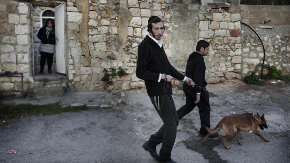 HUNDER ER URENE: En ortodkos jøde går tur med hunden sin i Jerusalem. Hunder er regnet for å være urene i tradisjonell jødedom. Personene på bildet har ingenting å gjøre med dødsdommen mot løshunden. Foto: AFP PHOTO/MARCO LONGARI/SCANPIX