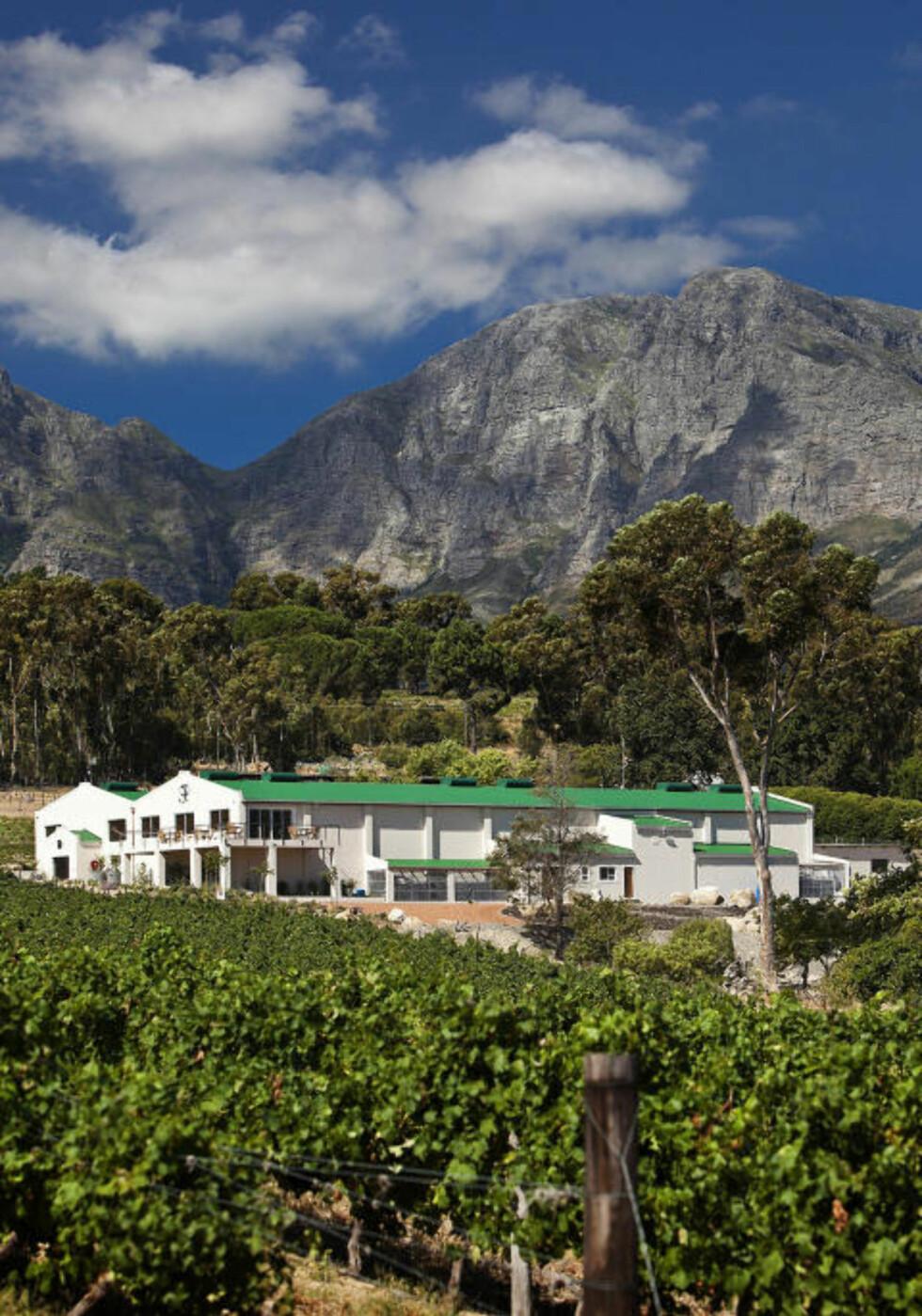 VAKKER BELIGGENHET: Vendt mot havet ligger de skrånende vinmarkene til Journeys End, som har laget dagens vinner, en Cabernet Sauvignon 2007.