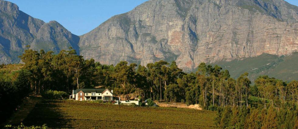 VINELDORADO: Fem mil øst for Cape Town i Sør-Afrika ligger vinbyen Stellenbosch på ei fruktbar slette omkranset av høye fjell. Vinmarkene strekker seg oppover i åssidene rundt byen.