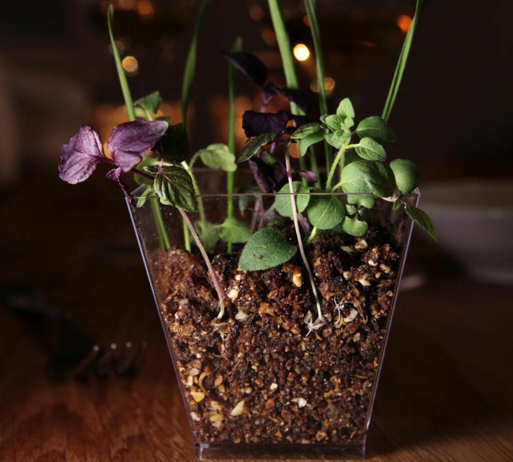 Optisk illusjon: Rynker du på nesa hvis du får beskjed om å spise innholdet i blomsterpotta som står på bordet? Da er det greit å vite at jorda er spiselig. Foto: Mette Randem.