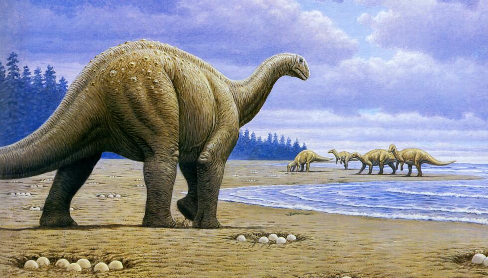 DINOSAUR: Titanosaur skal ha sett slik ut. Foto: Science Photo Library / NTB Scanpix