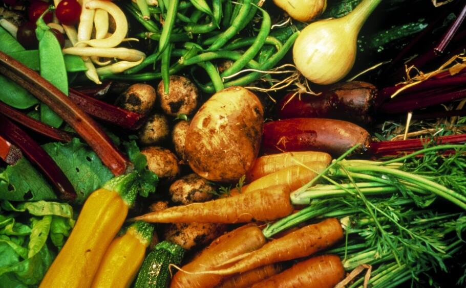 POPULÆRT: Aldri før har statistikken antydet at vi spiser mer grønnsaker, og siden år 2000 har dette forbruket økt fra 59 til 81 kilo i året per person, mens forbruket av frukt og bær har gått opp fra 69 til 89 kilo. Foto: © David Trood / BAM / Samfoto