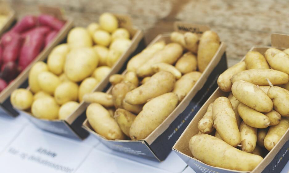 SMÅ OG FULLE AV SMAK: De nye småpotetene er elegante, koker raskt, kan spises med skallet på og faller i smak hos både kokker og publikum. Foto: Nadia Frantsen