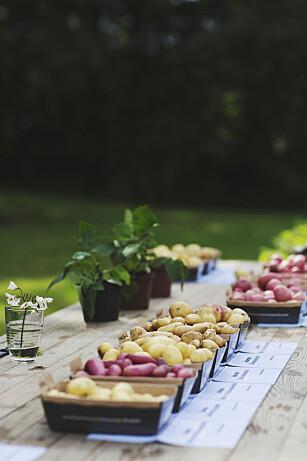 FLERE SORTER: Utvalget av norske poteter øker. Utviklingen i retning småpoteter vil øke, tror potetbonde Åsmund Bjertsnæs. Foto: Nadia Frantsen.