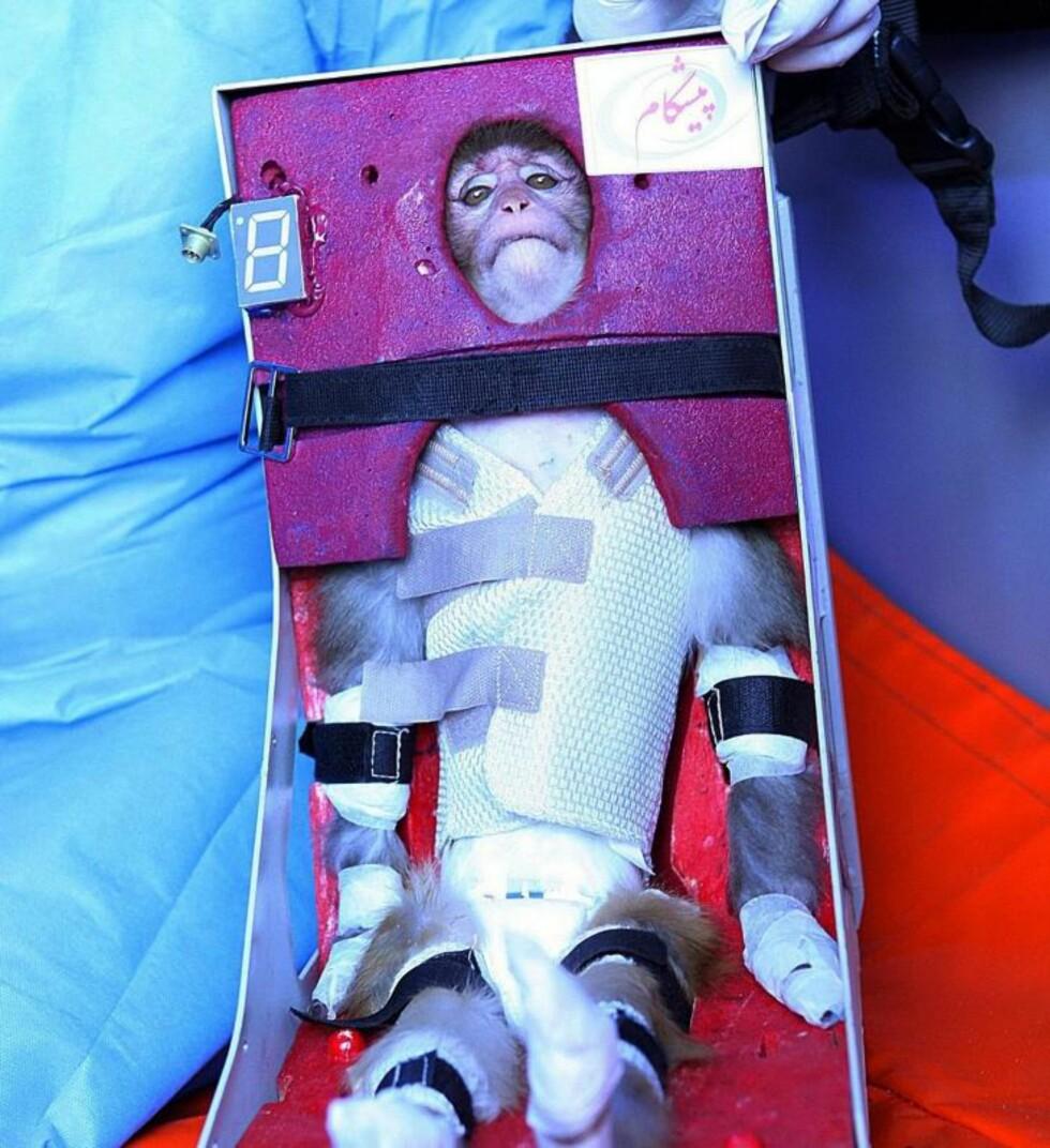 FORSØKSDYR: Slik ble apen presentert ved utskyting. Foto: EPA / STRINGER / NTB scanpix