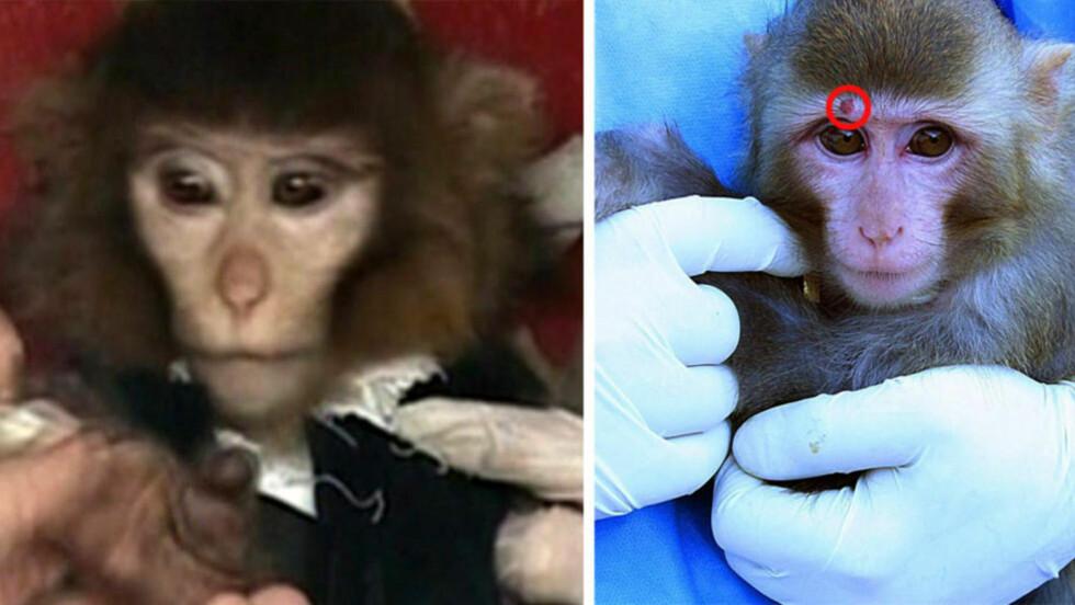 HVOR ER VORTEN? Bildet til venstre skal vise apekatten etter at den kom tilbake fra verdensrommet. Bildet til høyre før. Foto: AP og AFP PHOTO / IRNA / MOHAMMAD AGAH / NTB scanpix