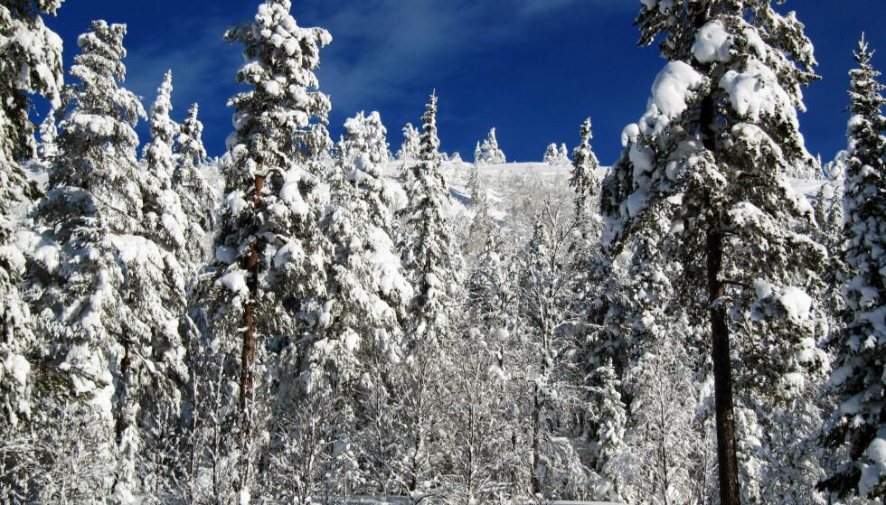 STRØMBRUDD: Det er områdene i Aust-Agder hvor snøfallet har vært tyngst som er rammet. Illustrasjonsfoto. Foto: Berit Keilen / NTB scanpix