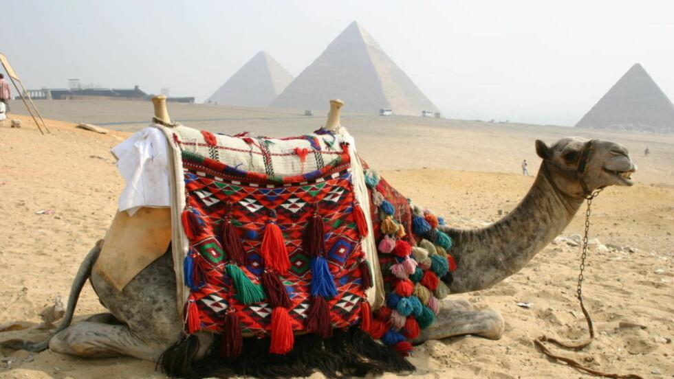 VENTER PÅ TURISTENE:  Pyramidene i Giza utenfor Kairo er berømte. Men se opp for kameldriverne, som gjerne vil ha ekstra tips. Foto: Kirsten M. Buzzi/Dagbladet