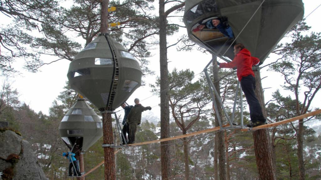 TRÆR: Basecamp Preikestolen kan tilby overnatting  på denne måten. Foto: Stavanger Turistforening
